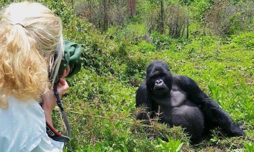 Gorilla-Safari-ug